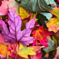 """""""Autumn paints in colours that summer has never seen""""."""